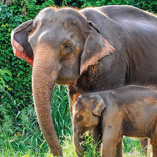 Elephant Day Care Package - akyra Manor Chiang Mai